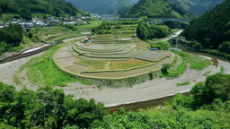 Aragijima rice terraces Stock Video Footage