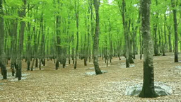八甲田の新緑のブナ林と残雪 Footage