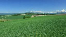 Taisetsuzan hills and wheat fields Stock Video Footage