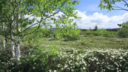 Mount Iozan and wild rosemary blooming on the natural trails of Tsutsujigahara Footage