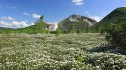 Mount Iozan and wild rosemary of Tsutsujigahara Stock Video Footage