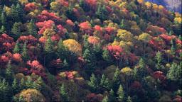 Autumn foliage of the Mikuni pass Stock Video Footage
