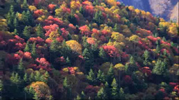 Autumn foliage of the Mikuni pass Footage