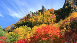Autumn leaves in Sounkyo Gorge Stock Video Footage