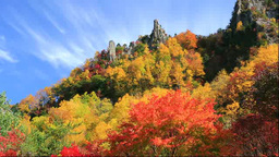 Autumn leaves in Sounkyo Gorge Footage