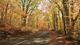 紅葉のブナの森と道 Stock Video Footage