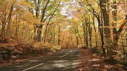 紅葉のブナの森と道 Footage