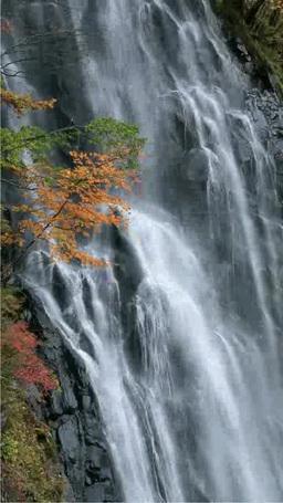 立又渓谷の紅葉と一ノ滝 Footage