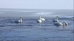 Lake Tofutsu and swans Stock Video Footage