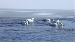 Lake Tofutsu and swans Footage