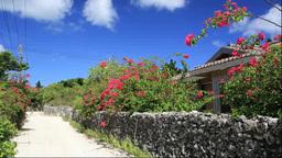 竹富島の赤瓦屋根の民家と石垣とブーゲンビリア... Stock Video Footage