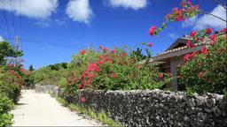 竹富島の赤瓦屋根の民家と石垣とブーゲンビリア Footage