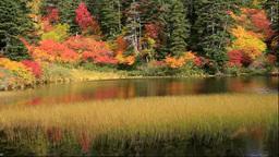 大雪山の高原温泉の緑の沼の紅葉 Stock Video Footage