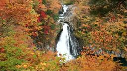 鳥海山の紅葉の法体の滝 Stock Video Footage