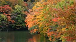 白神山地の十二湖の越口の池の紅葉 Footage