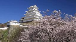 姫路城と桜 Stock Video Footage