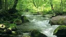 奥入瀬渓流の阿修羅の流れ石ヶ戸の流れ Footage