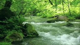 奥入瀬渓流の阿修羅の流れ石ヶ戸の流れ Stock Video Footage