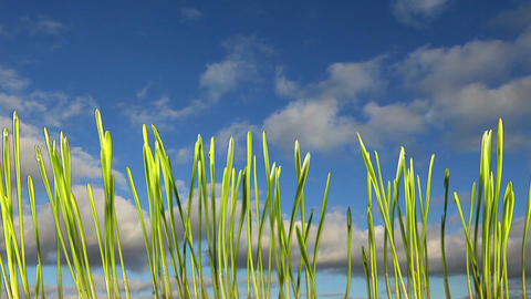 Growing grass on a background of clouds (Time Lapse) Stock Video Footage
