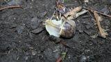 snail crawls(Helix pomatia), timelapse Footage