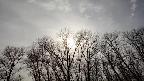 clouds behind the trees in the forest (Time Lapse) Stock Video Footage
