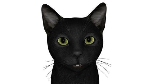 話す猫 Animation