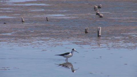 birds 6 Footage