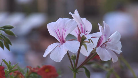 flowers 1 Footage
