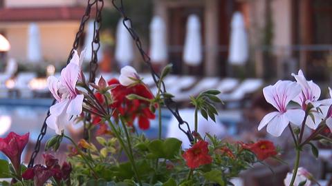 flowers 3 Stock Video Footage