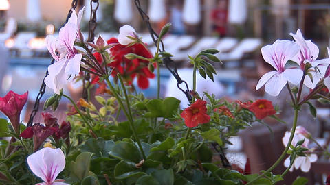 flowers 3 Stock Video Footage