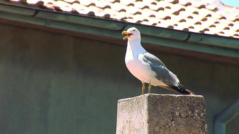seagull 6 Stock Video Footage