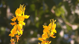yellow flowers 3 Stock Video Footage