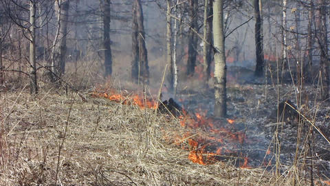 Forest fire Stock Video Footage