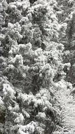 雪の降る貴船の森 影片素材