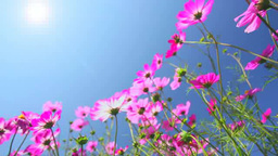 Cosmos And The Sun stock footage