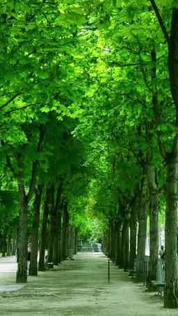 パリの公園の並木道 ภาพวิดีโอ