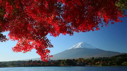 Fall foliage, Mt. Fuji and Lake Kawaguchi Footage
