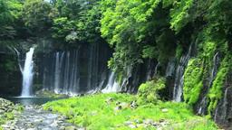 Fresh greenery of Shiraito waterfall Footage