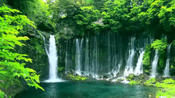 Fresh greenery of Shiraito waterfall Live Action