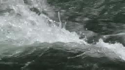 渓流の水泡 stock footage