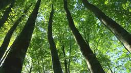 鍋倉山のブナ林 Footage