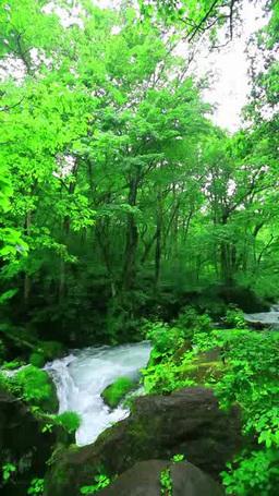 Oirase mountain stream 影片素材