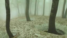 霧の鍋倉山のブナ林と残雪 Footage