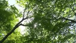回転するブナの林と木漏れ日 Footage