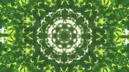 新緑のブナの万華鏡のCG Footage
