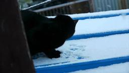 雪で遊ぶ猫 Footage
