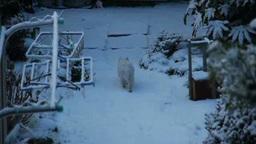 雪の上を歩く猫の後ろ姿 Footage