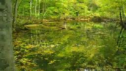蔦川に浮かぶブナの落葉 Footage