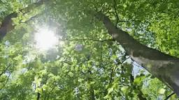 新緑のブナ林と木漏れ日 Footage