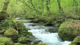 Oirase mountain stream Footage